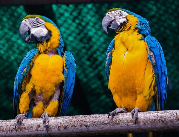 Pět zajímavostí o papoušcích