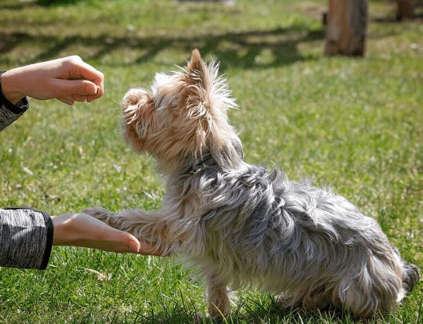 Pořízení a výcvik psa