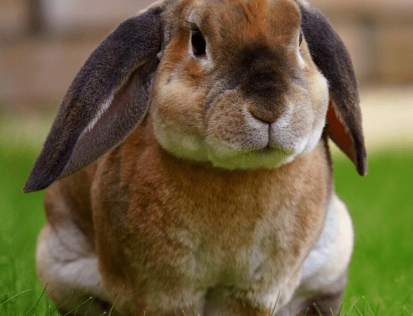 I s králíky jde soutěžit