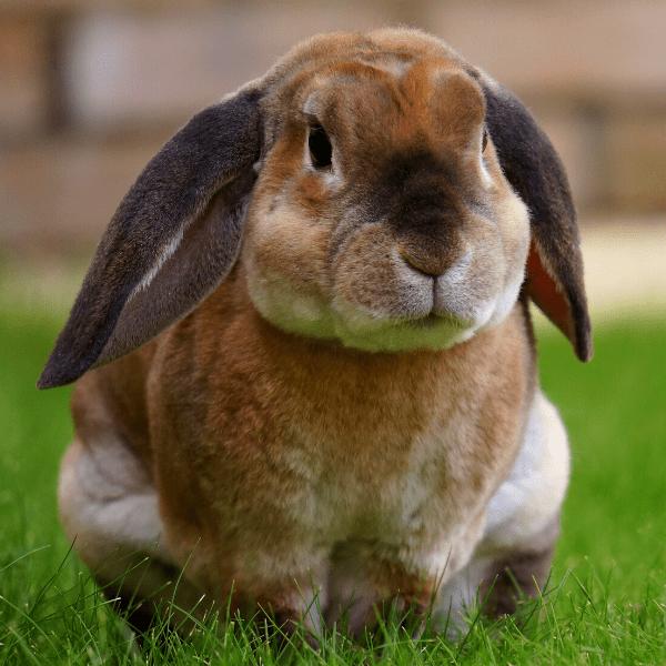 Vedle konvenčních koňských závodů existují i podobné soutěže i pro jiná zvířata, například soutěž v králičím hopu. Stejně jako u koní, i u králíků soutěži předchází důkladná příprava. Možná byste nečekali, jakou roli hraje například povaha králíka. Králičí hop má celkem čtyři disciplíny. Tou první je rovinná dráha, u které se hodnotí čas a počet […]