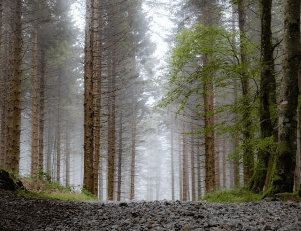 ONLINE: 840 km sám pěšky přes Pyreneje (Jakub Šolc)