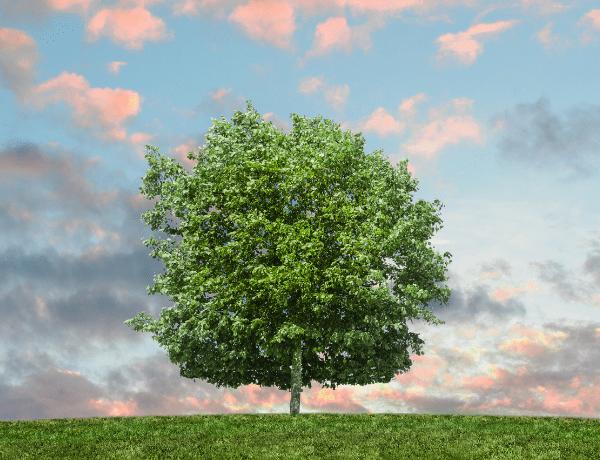 Alej roku 2021 – soutěž stromů i alejí už po jedenácté