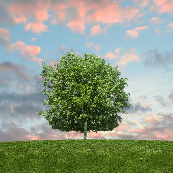 Sdružení Arnika – Centrum pro podporu občanů, jakožto česká nezisková organizace spojující jedince usilující o lepší životní prostředí, pořádáv roce 2021 již jedenáctý ročník ankety Alej roku, soutěž o nejkrásnější […]
