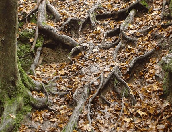 Zpátky ke kořenům